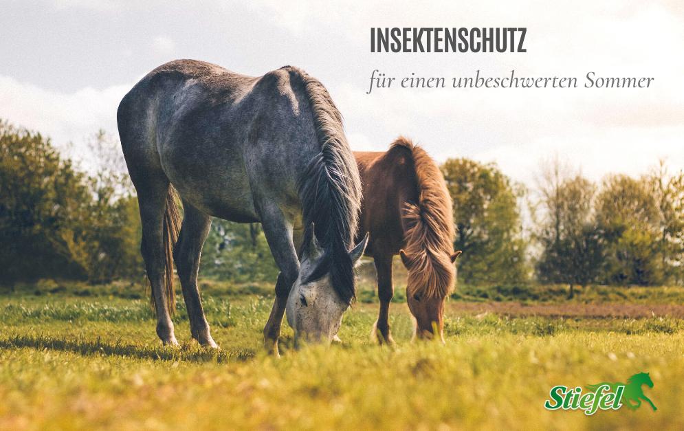 Im Sommer geht's rund - Fliegen, Bremsen und Stechmücken machen unseren Pferden das Leben schwer. Dagegen gibt's Hilfe - von Stiefel!