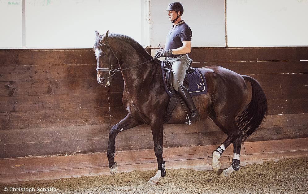 Dressur MIT und FÜR das Pferd. Das wollen viele, aber wenige tun es. Einer, der diese Kunst im Sinne der alten Meister beherrscht, ist Christoph Ackermann.