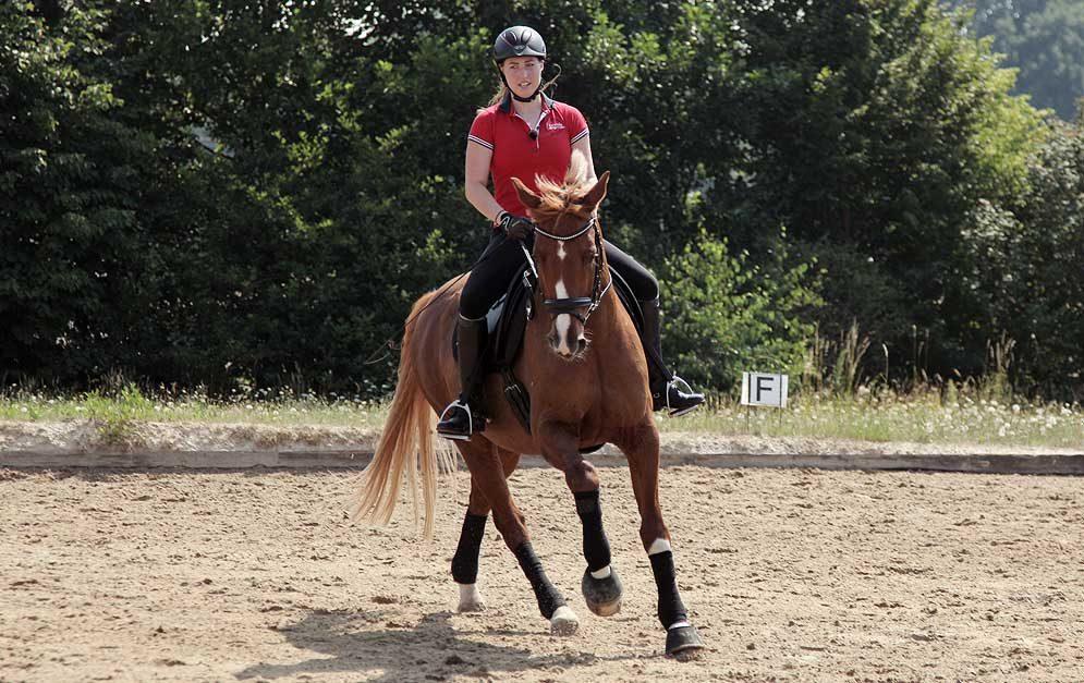 Reitübung 4 x 8: Reite kleine Zirkel und Volten um Stangen und Hütchen und gymnastiziere so das Pferd einfach aber effektiv.