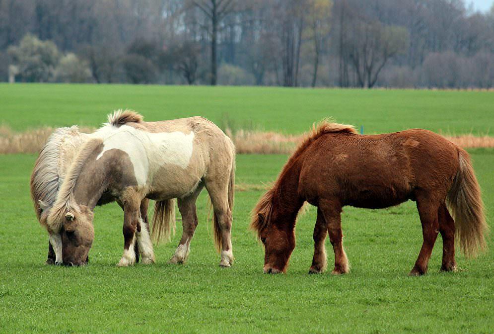 Entwurmung von Pferden - Entwicklungszyklen der Endoparasiten