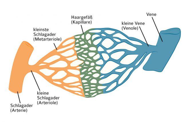 1 Header Lungenkreislauf