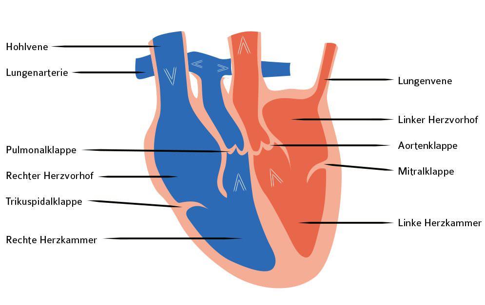 2 Header Lungenkreislauf