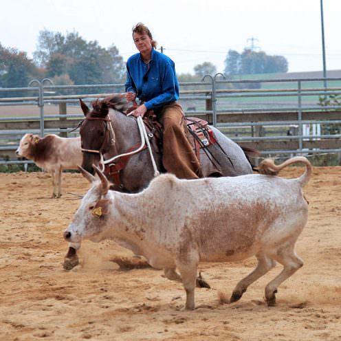 Leistungsdiagnostik bei Pferden - Sportliche Leistung
