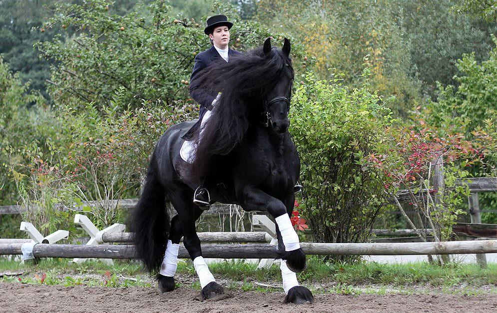 Impfungen von Pferden: Besonderheit Turnierpferd, Impfplan, Impfkonzept