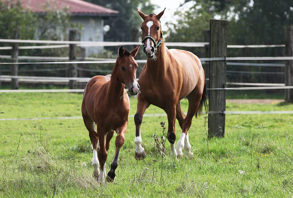 Allgemeine Infos zur Entwurmung von Pferden