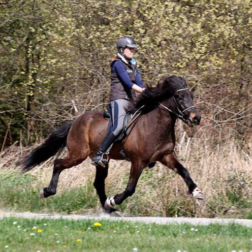 Mehr als nur drei Gangarten sind üblicherweise die charakteristischen Kennzeichen sogenannter Gangpferde. Um die Ausbildung dieser Mehrgangkünstler und ihrer Reiter kümmern sich Pferdewirte der Fachrichtung Spezialreitweisen im Einsatzgebiet Gangreiten.