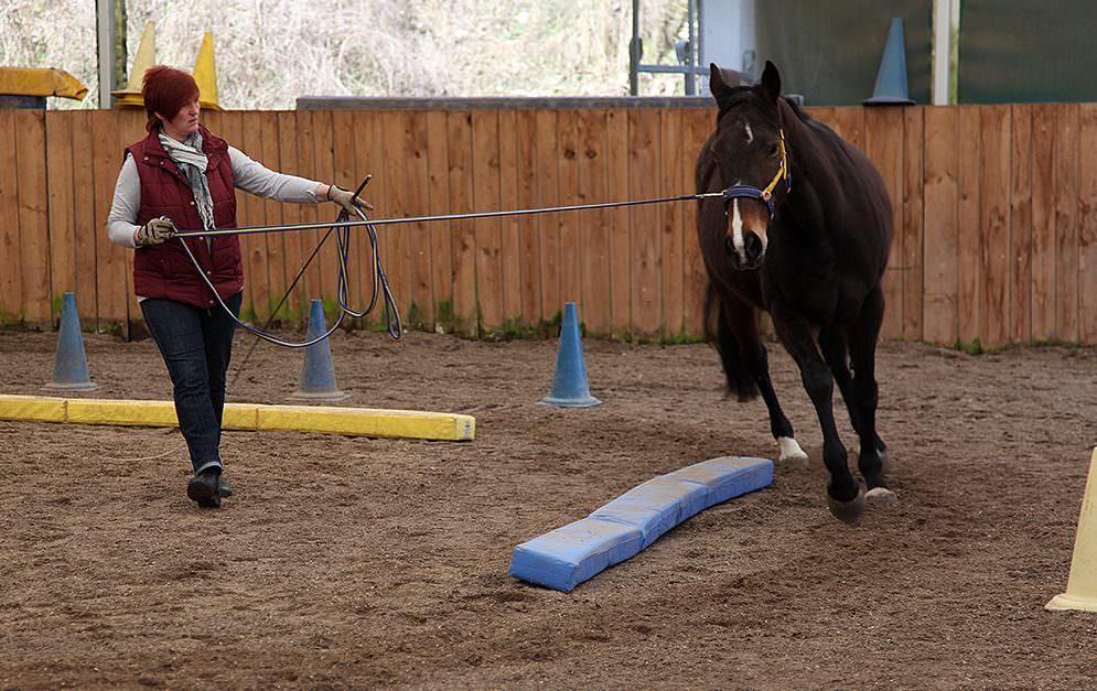 Longieren im Intervalltraining. Für seine neue Trainingsmethode hat sich Michael Geitner das Wissen über Krafttraining und Trainingslehre des Menschen zu nutze gemacht und auf die Arbeit mit Pferden übertragen.