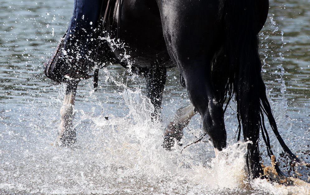 Header Gelenke Pferd