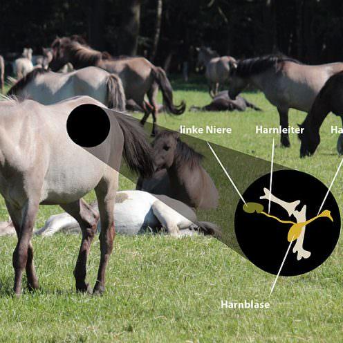 Header Harnsystem Pferd