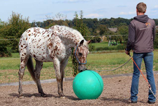 Ist dein Pferd ängstlich oder respektlos?