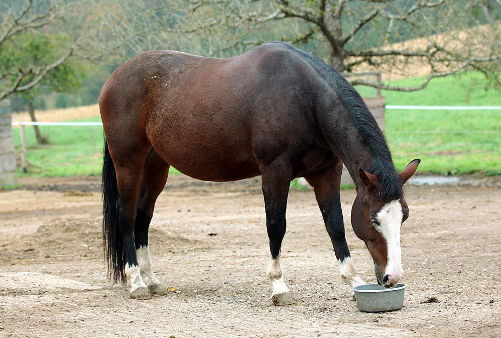 Sorglose Supplementierung von Ergänzungsfuttermitteln bei Pferden.