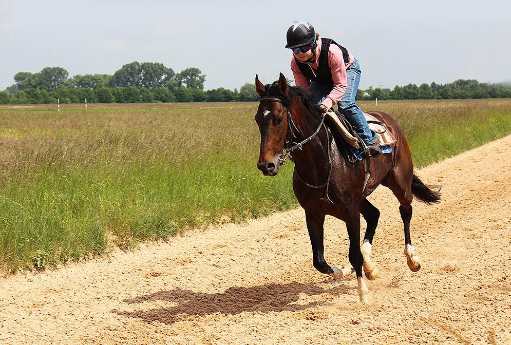 Ross und Reiter haben eine Gemeinsamkeit: sie können beide heftig schwitzen - eine enorme Leistung der Haut, die den Körper kühlen soll.