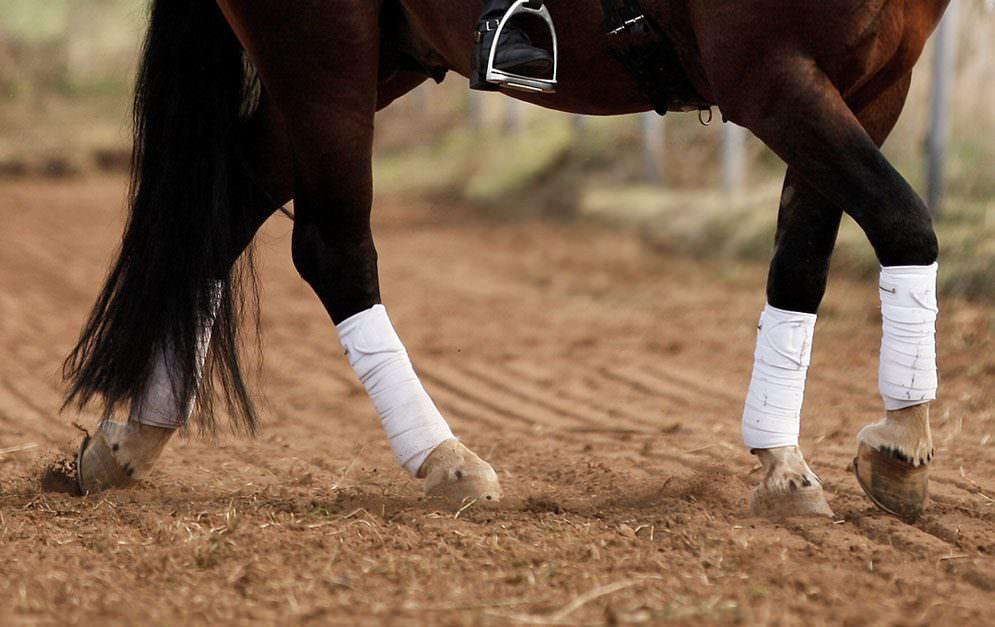 Anatomie des Pferdes - Huf