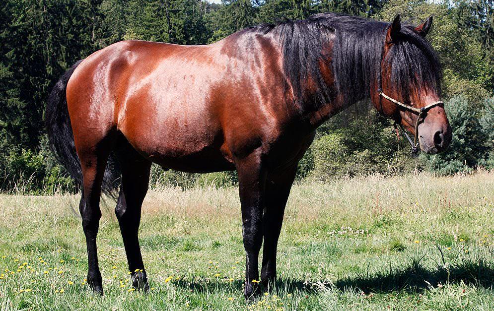 Header Gliedmaßenstellung Pferd