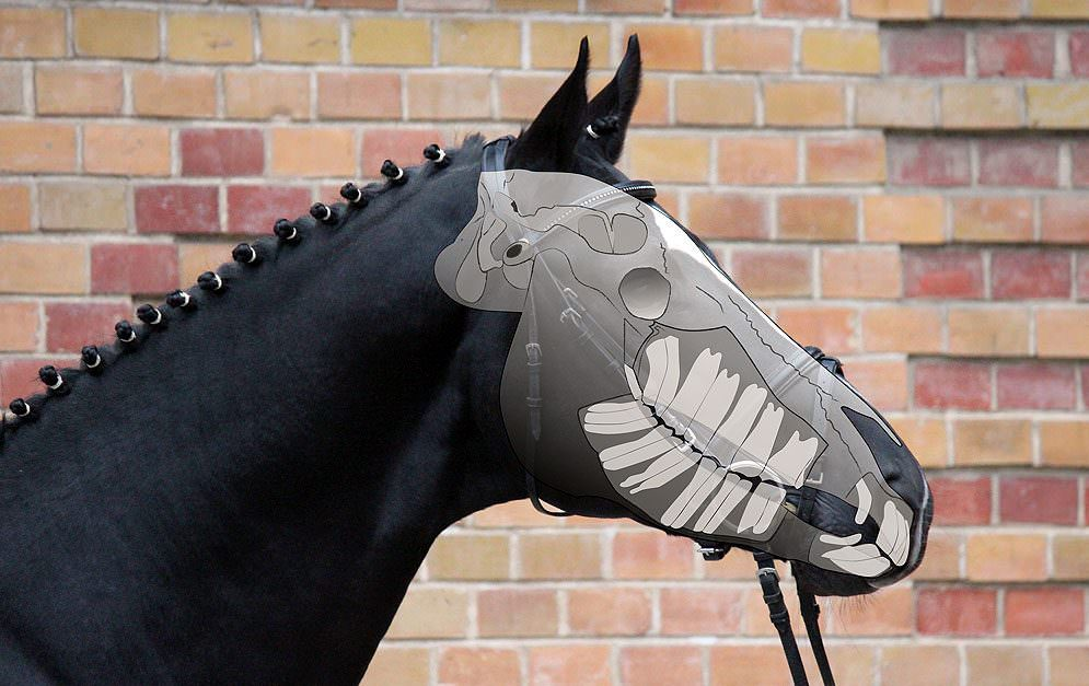 Header Schädel Pferd
