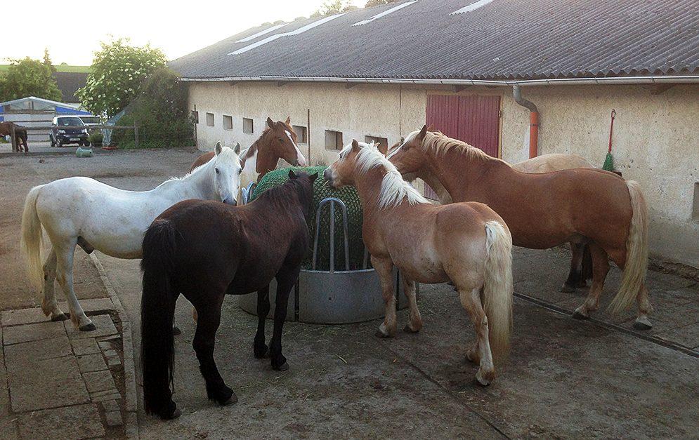 In diesem Artikel zeigen wir dir, wie du ein Heunetz gut an einer Rundraufe befestigen kannst, sodass die Pferde nicht zu große Mengen Heu fressen.
