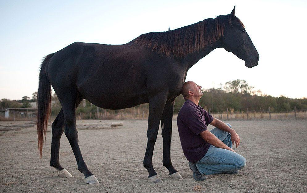 Auf dem alten Hof und den weitläufigen Weiden hat sich vor einigen Jahren eine erfolgreiche Non-Profit-Organisation angesiedelt, die Vollblutpferde vor dem illegalen Pferderennen-Markt und dem Tod im Schlachthof rettet.