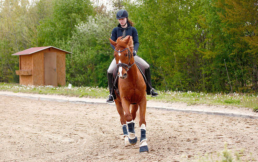 Der Außengalopp ist für das Pferd eine anstrengende Übung. Doch wie trainiere ich den Außengalopp am besten? Wir geben dir Tipps und Hilfestellungen.