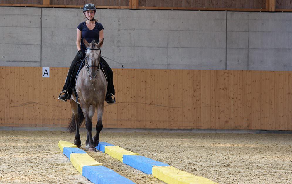 Die Dual-Aktivierung ist ein Trainingskonzept für Pferd und Reiter, das von Michael Geitner entwickelt wurde.
