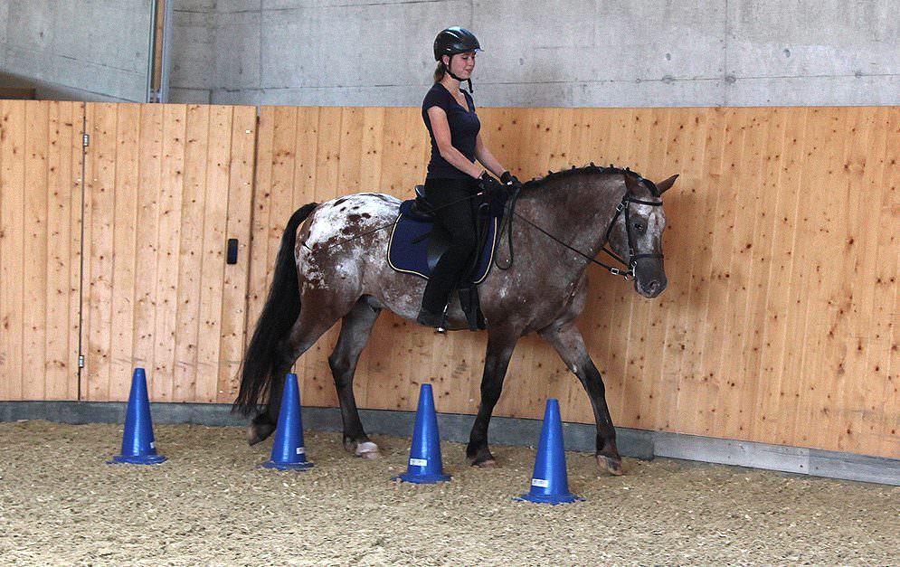 Die Achterschlaufe ist eine Übung der gerittenen Dual-Aktivierung nach Michael Geitner.