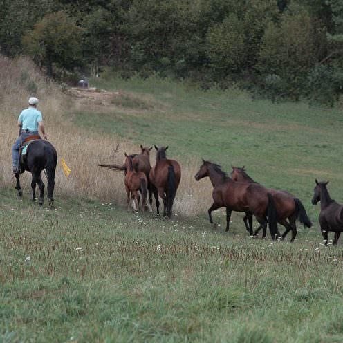 Wie man auf einer großen Fläche Pferde arbeitet, indem man selbst auf dem Pferderücken sitzt, das zeigt dir Ernst-Peter Frey in diesem Beitrag.