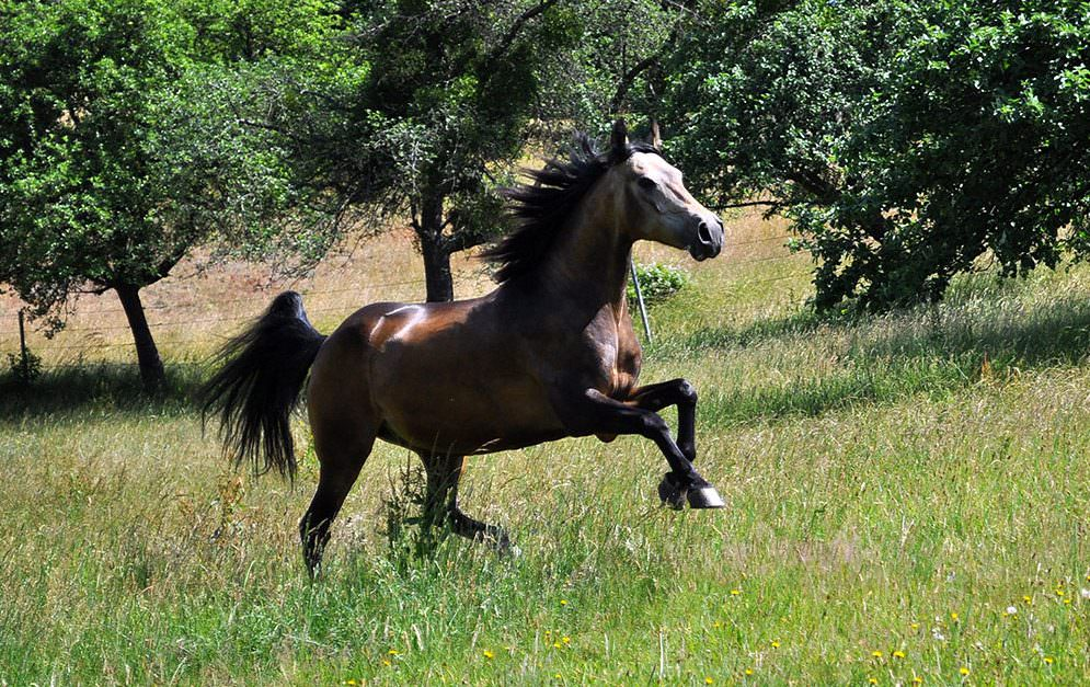 Faszien werden immer öfter erwähnt, wenn es um gesundheitliche oder Trainingsprobleme bei Pferden geht. Doch was genau sind Faszien?
