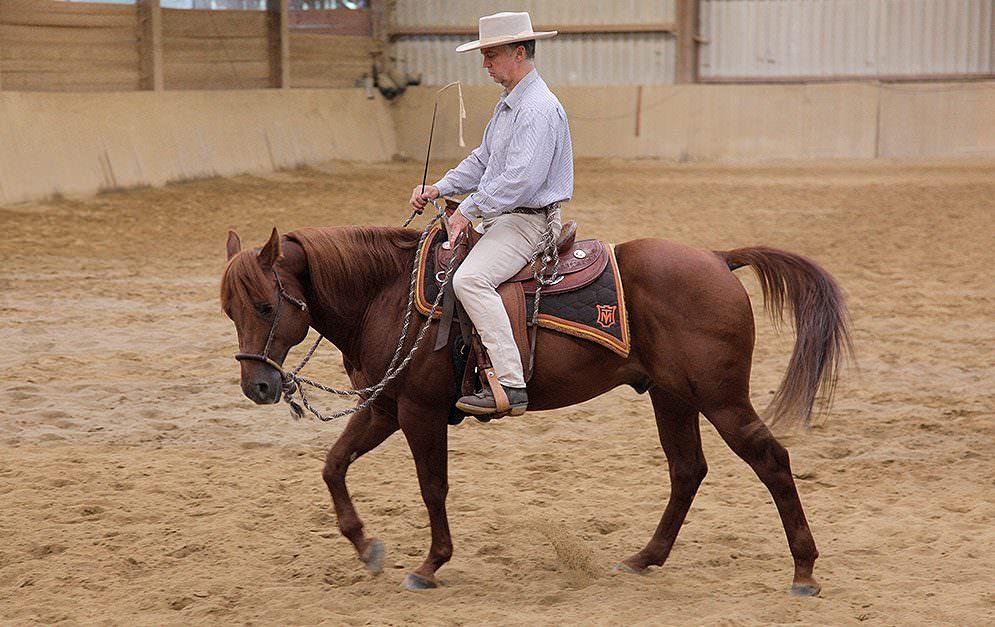 Man kann sein Pferd nicht nur mit Gebiss reiten - auch ohne ein solches kann man gut mit seinem Tier kommunizieren. Doch bei den gebisslosen Zäumungen gibt es gravierende Unterschiede in der Wirkung, welche nachfolgend erklärt werden.