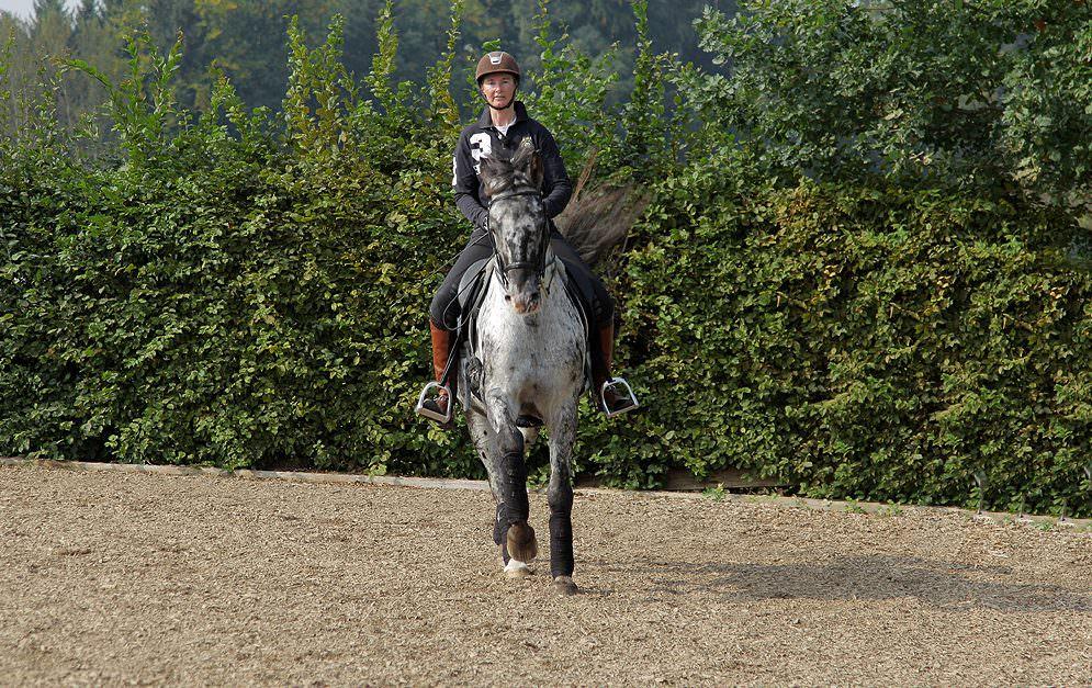 Ziel des Geraderichtens ist es, die natürliche Schiefe des Pferdes auszugleichen und beide Körperseiten gleichmäßig geschmeidig zu gymnastizieren.