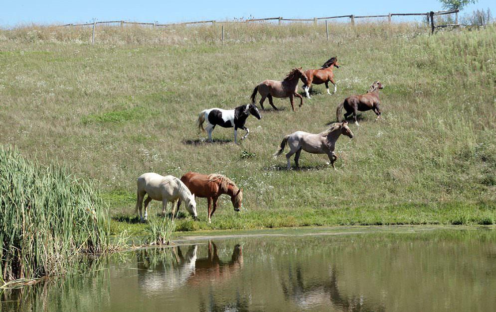 Influenza bei Pferden - das solltest du über die hochansteckende Virusinfektion wissen.