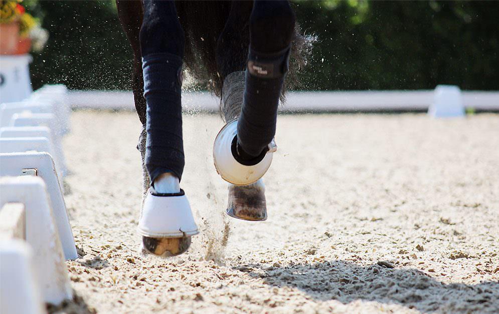 Grundgangarten beim Pferd