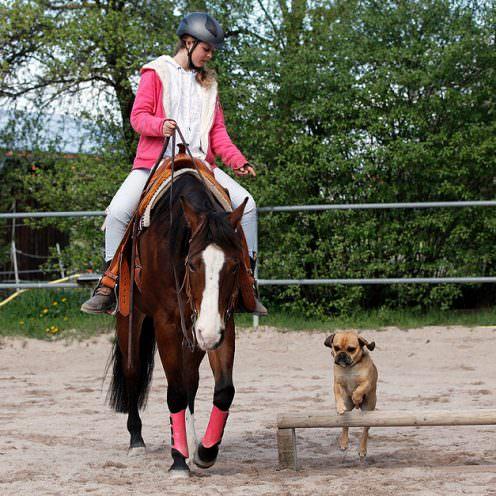 Header Horse And Dog Trail Teil1