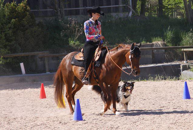 Horse and Dog Trail - Das Turnier