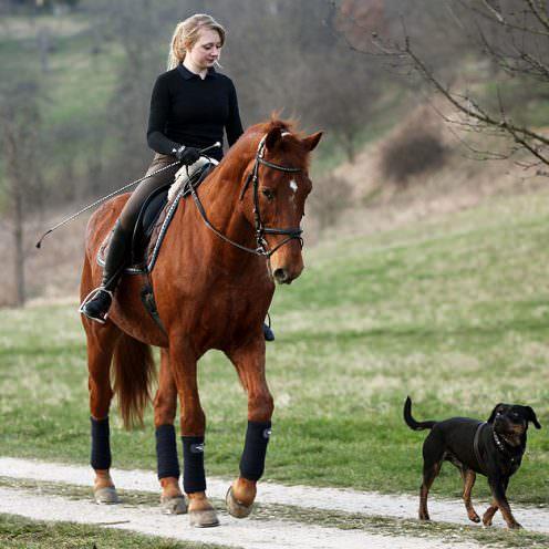 Header Horse And Dog Teil1