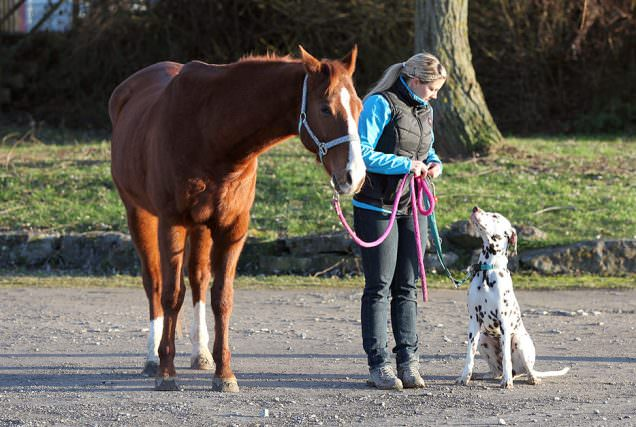 Header Horse And Dog Teil4