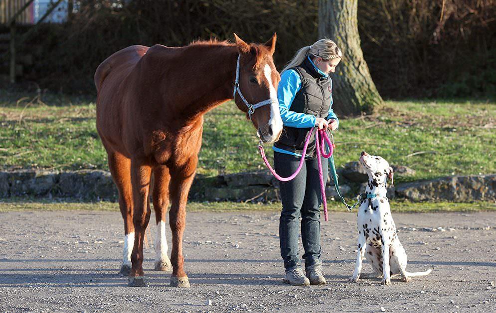 Header Horse And Dog Teil4