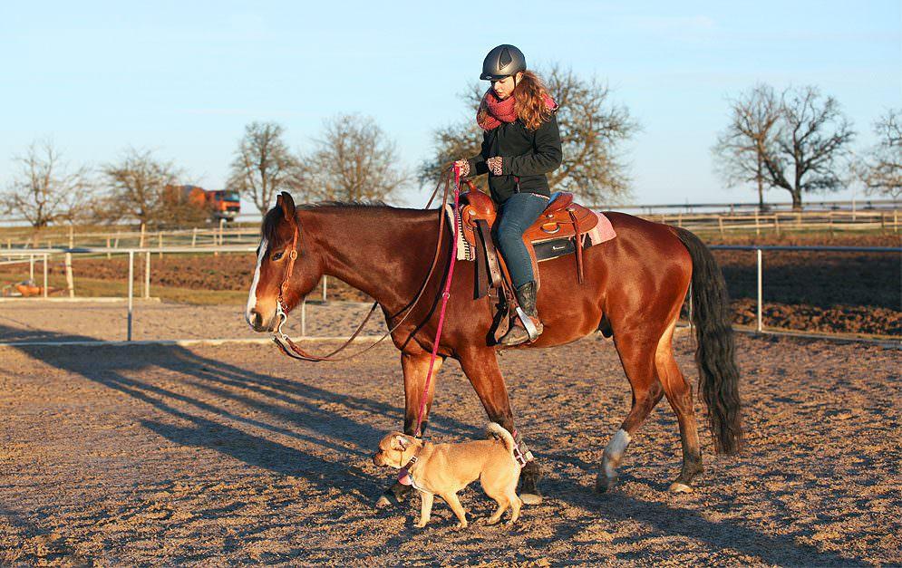Horse and Dog - Die Leinenführigkeit vom Sattel aus