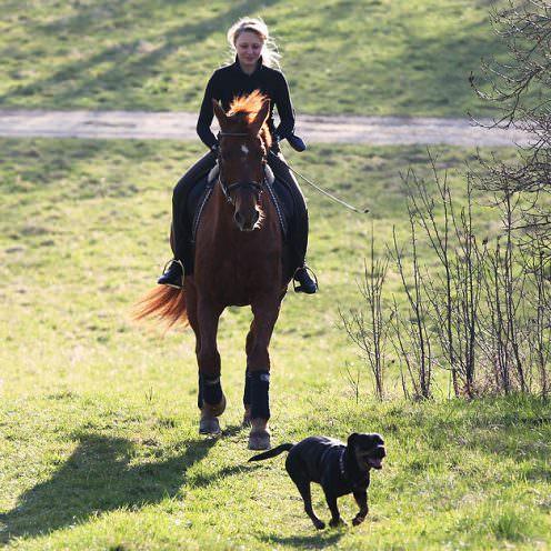 Horse and Dog - Geländeritt mit Hund