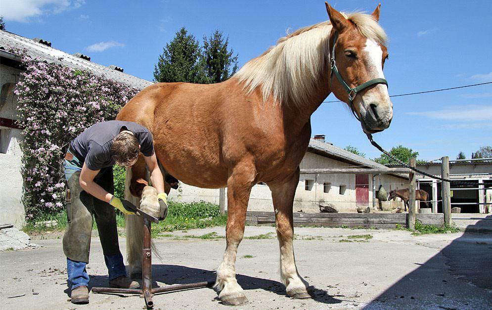 Hufpflege beim Pferd.
