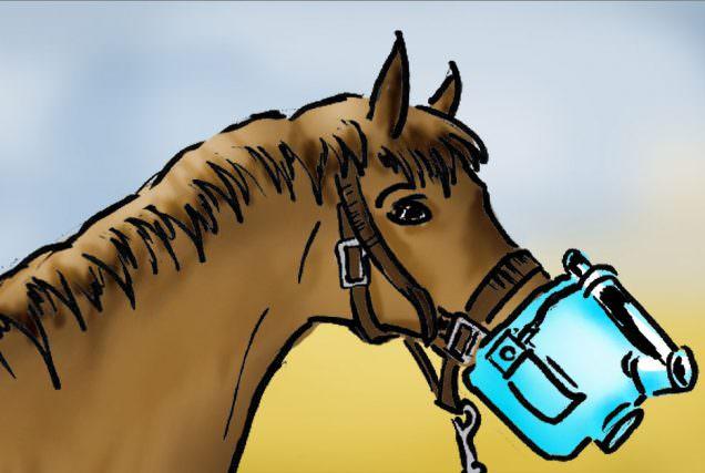 Inhalieren bei Pferden
