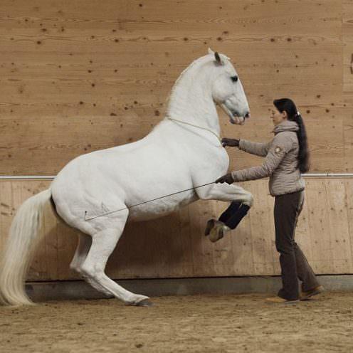 Anja Beran steht für die Klassische Reitkunst ein und bildet alle ihre Pferde behutsam und nach System aus.
