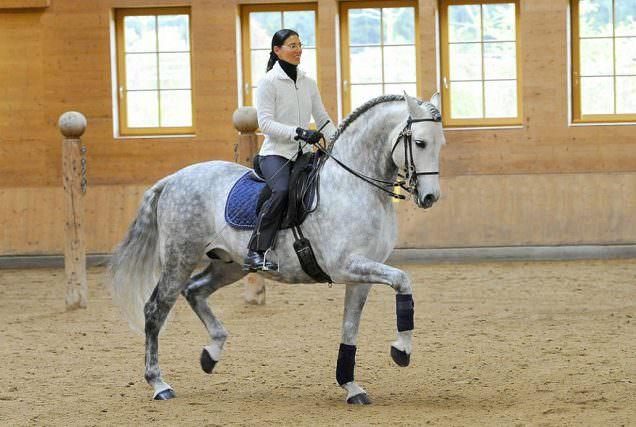 Die Klassische Reitkunst ist die Grundlage für ein gesundes, aufmerksames und motiviertes Pferd.