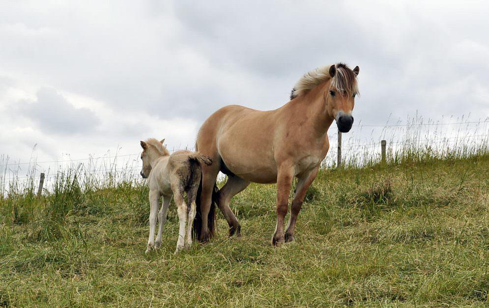 Kotwasser bei Pferden.