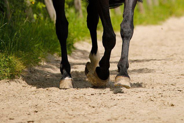 In dieser Reitübung wird nicht nur die Schulter und der Hals des Pferdes kontrolliert, sondern auch seine Mittelhand. Das Überqueren von Stangen fördert zudem die Hinterhandaktivität.