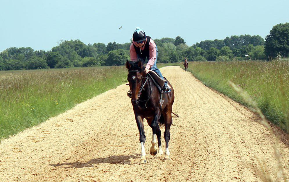 Lungenbluter - Atemwegserkrankungen bei Pferden