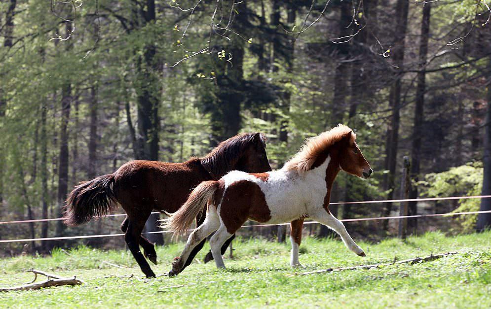 Lungenwürmer bei Pferden