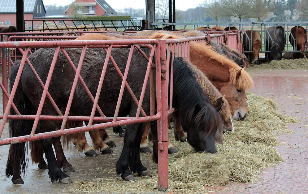 Bodennahe Fütterung von Pferden