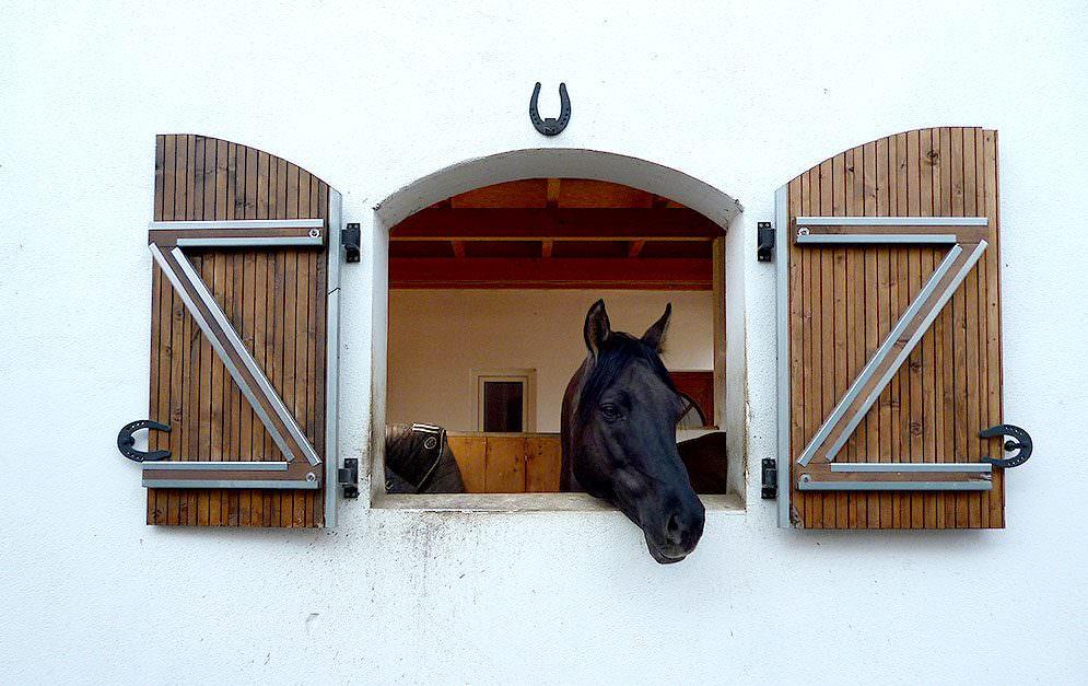 Wir klären auf, wie man einen Pferdeeinstellungsvertrag rechtlich einordnet und welche Kündigungsfristen die Vertragspartner haben.