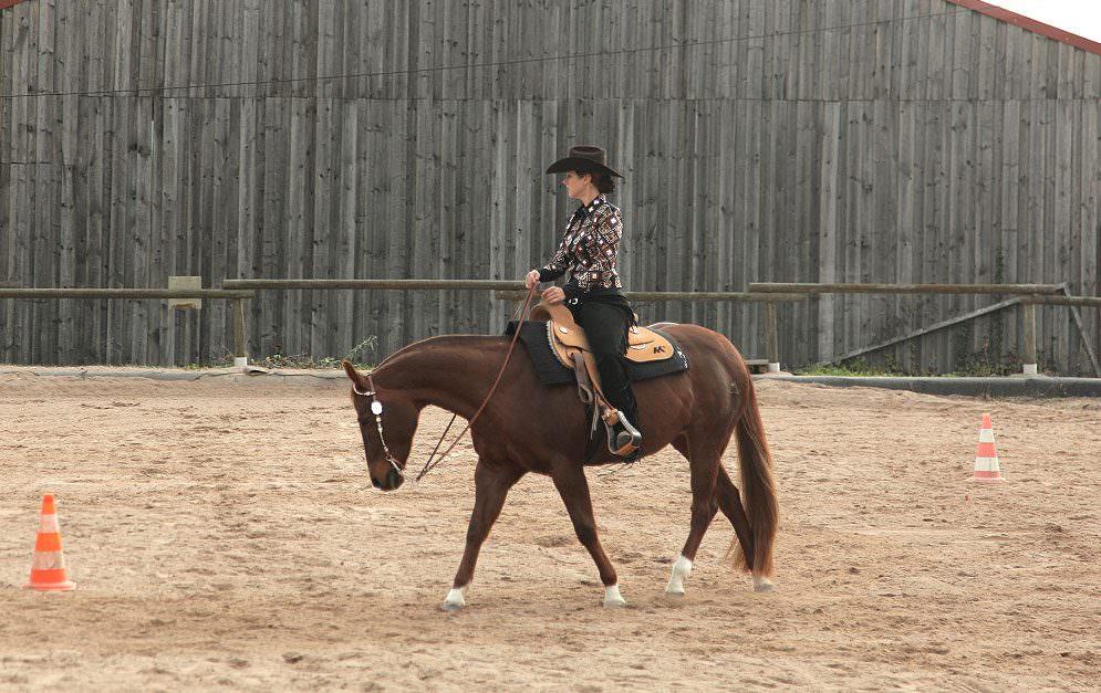 Heute geht es vor allem um Stellung, Biegung, Schwung und Schubkraft. Die heutige Reitübung ist also ein richtiger Alleskönner, der das Pferd locker und geschmeidig macht.