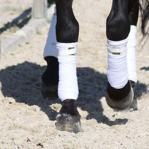 Um die Rittigkeit und Durchlässigkeit des Pferdes immer weiter zu verbessern, kann man diese Übung ausprobieren, ohne viel Aufwand.