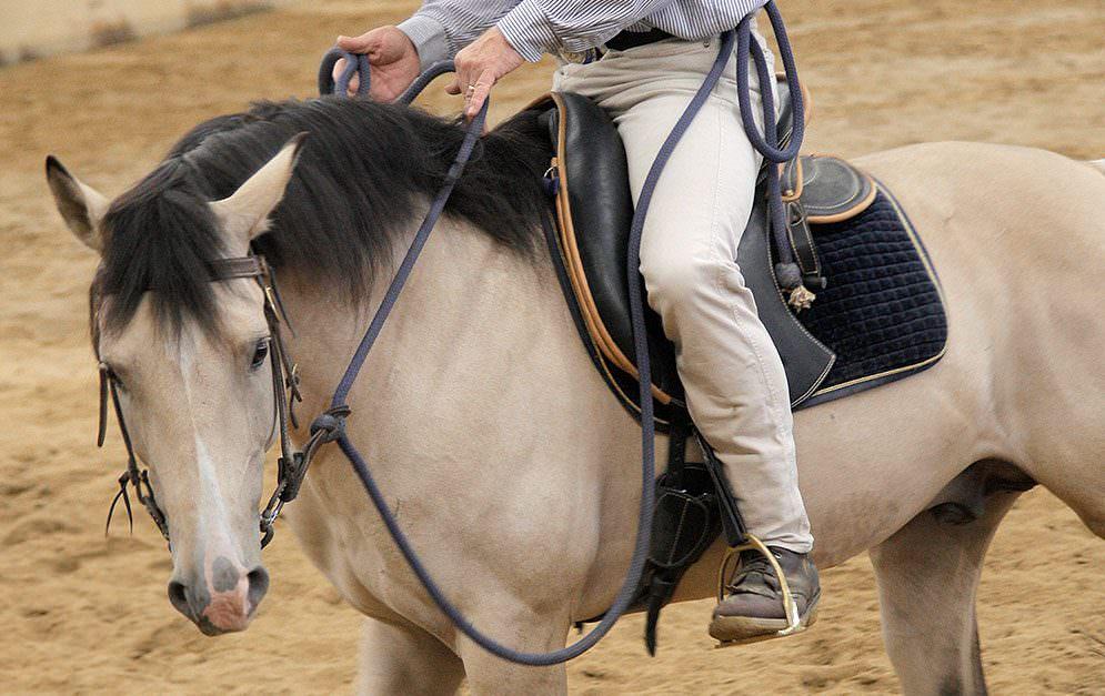 Vor allem etwas gedrungenere Pferde haben oft das Problem, dass sie im Genick bzw. im Hals weniger leicht und geschmeidig sind. Wenn das Stellen und Biegen zäh wird, kannst du mit dieser Übung dagegenhalten.
